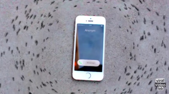 iPhone ringtones makes ants dance in circle