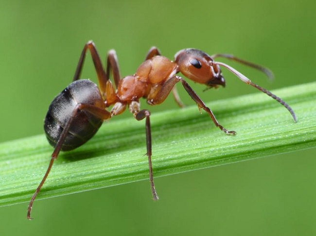 Ants traveled by sea to Invade tropical Regions