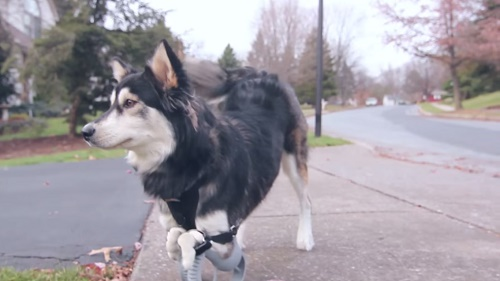 Derby's new life after getting 3D-printed prosthethics