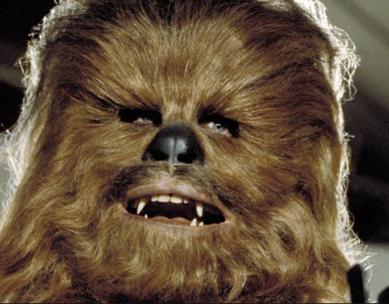 Scientists name new beetle species Chewbacca, after the Star Wars character