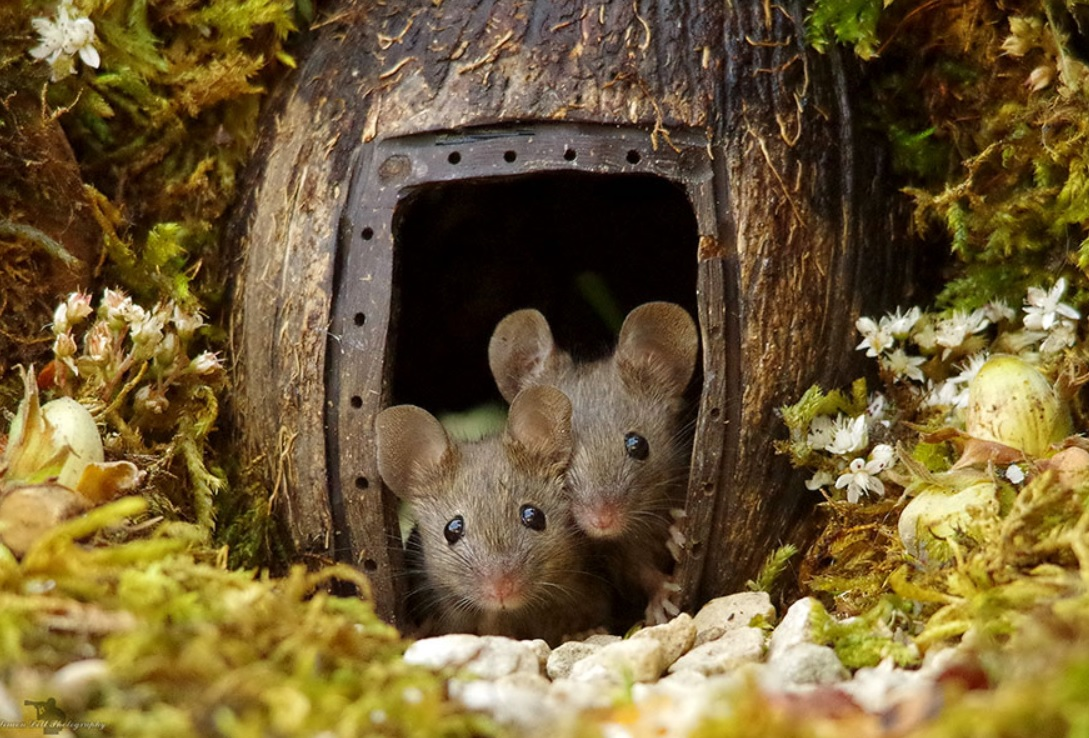 Photographer Discovers A Family Of Mice In His Garden: Makes A Beautiful Miniature Habitat For Them