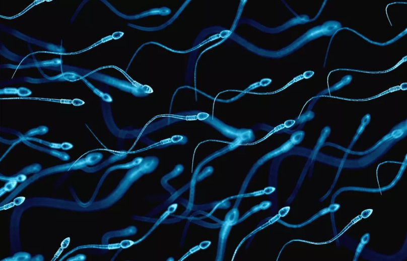Sperm Count Decreasing in Men, But Rate of Decrease is Not Yet Alarming