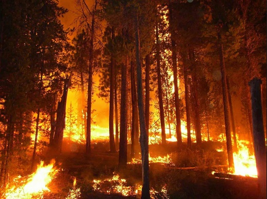 Role of Climate Change in Global Wildfire danger