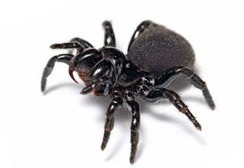 Spiders are the doorway to ultra-sensitive wearable devices