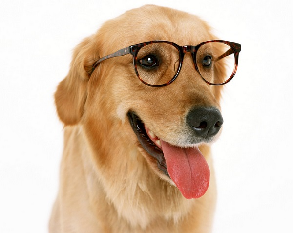 Attention! Dogs can sense when you are lying
