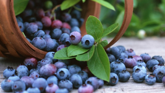 Blueberries can reduce your risk of Alzheimer's Disease
