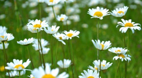 short winter warmer spring